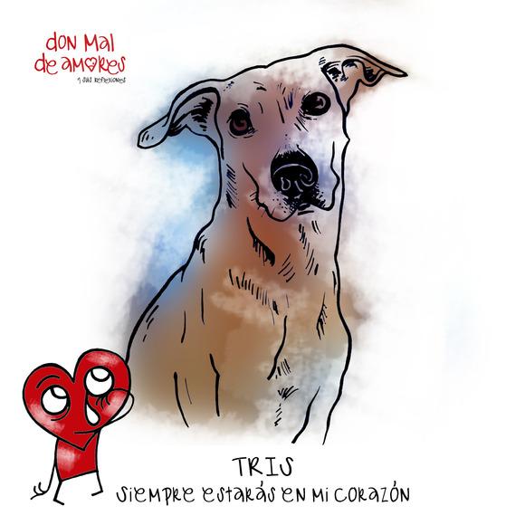 don Mal de amores #205